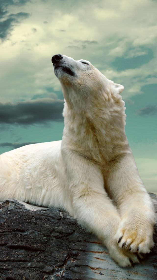 Cute Dog Wallpapers With Quotes Wallpaper Polar Bear Cute Animals Sky Clouds 8k