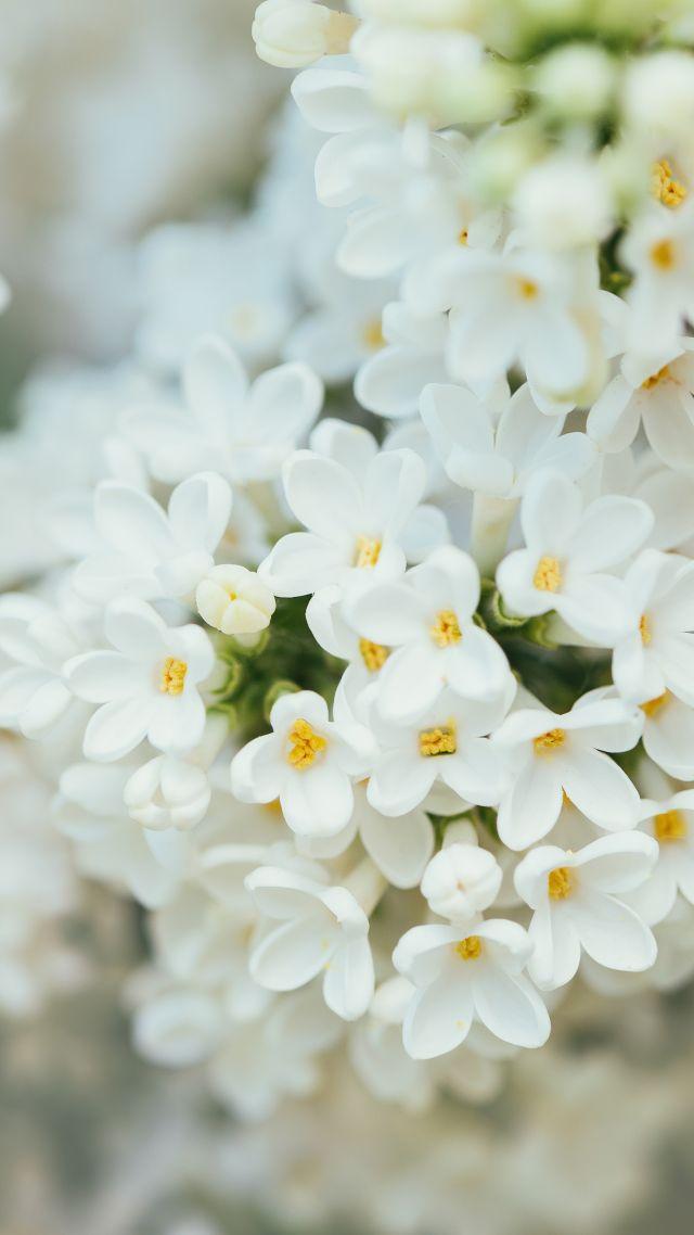 Son Wallpaper Quotes Wallpaper White Flower Spring 4k 7k Nature 18555