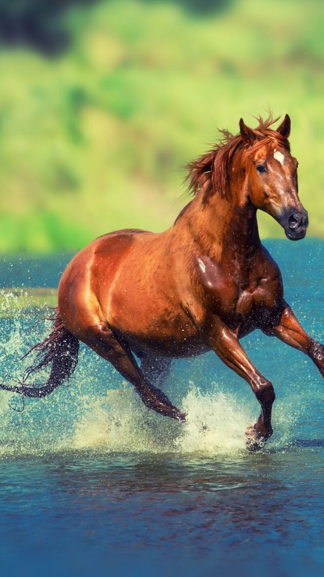 Wallpaper Of Cool Cars And Cute Grils Wallpaper Horse Brown 4k Animals 19776