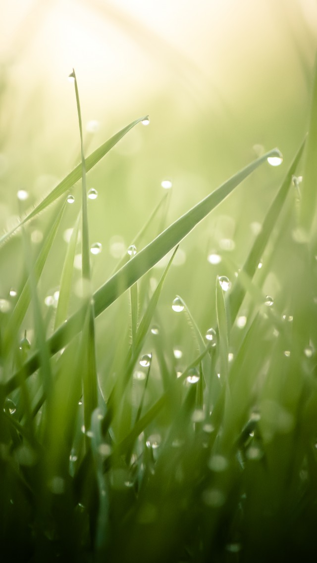 Cute Girly Summer Wallpapers Wallpaper Grass 4k Hd Wallpaper Green Drops Dew Sun