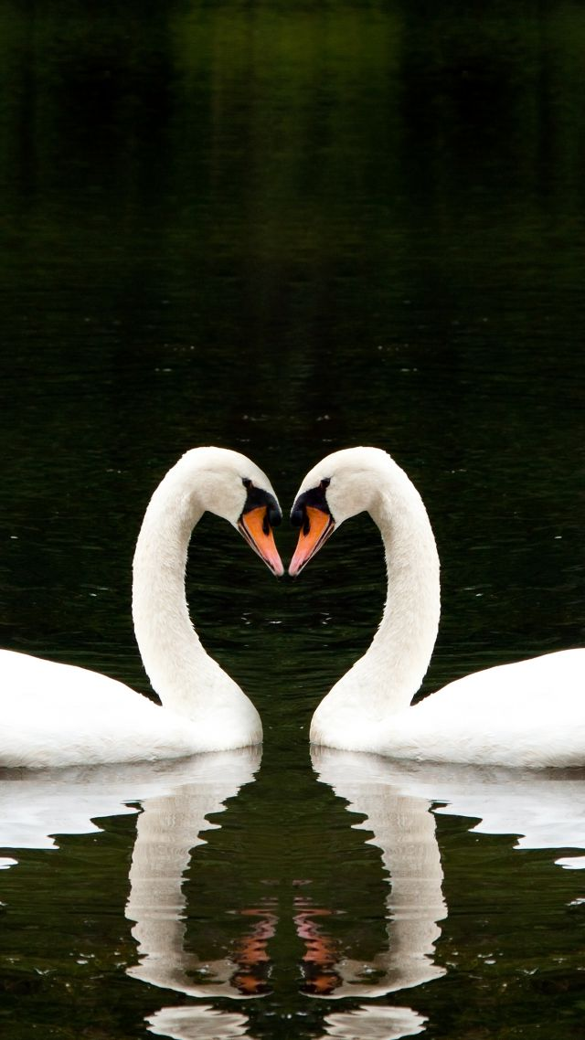 Romantic Love Wallpapers Hd Wallpaper Swan Couple Lake Cute Animals Love Animals
