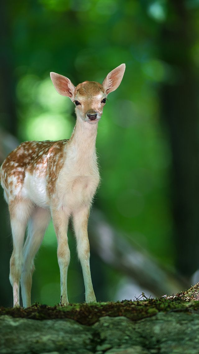 Cute Cheetah Wallpapers Wallpaper Deer Cute Animals Forest Animals 4575