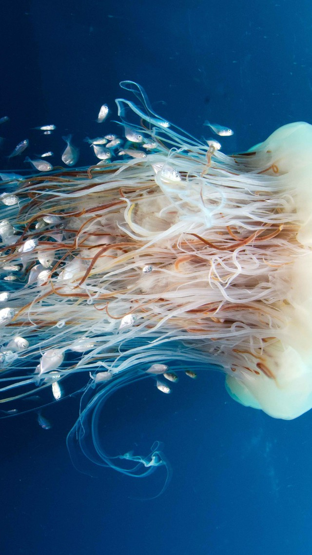 Best Quotes From The Yellow Wallpaper Wallpaper Jellyfish Rangiroa 4k 5k Wallpaper Hd 8k