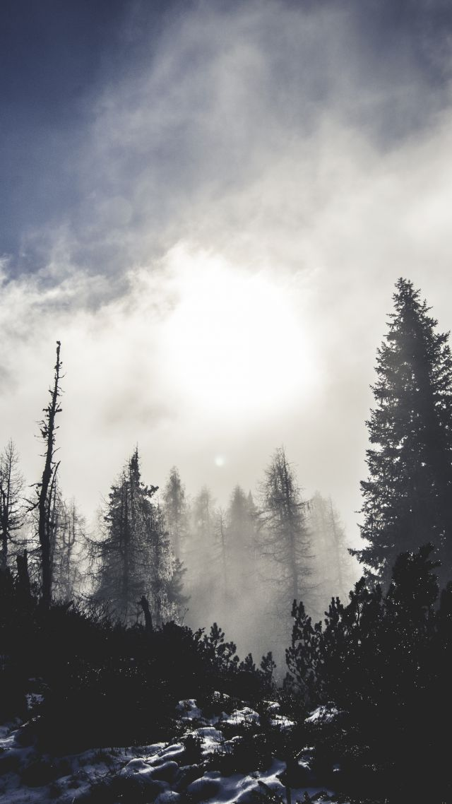 California Girls Facebook Wallpaper Wallpaper Forest 5k 4k Wallpaper Trees Pines Clouds