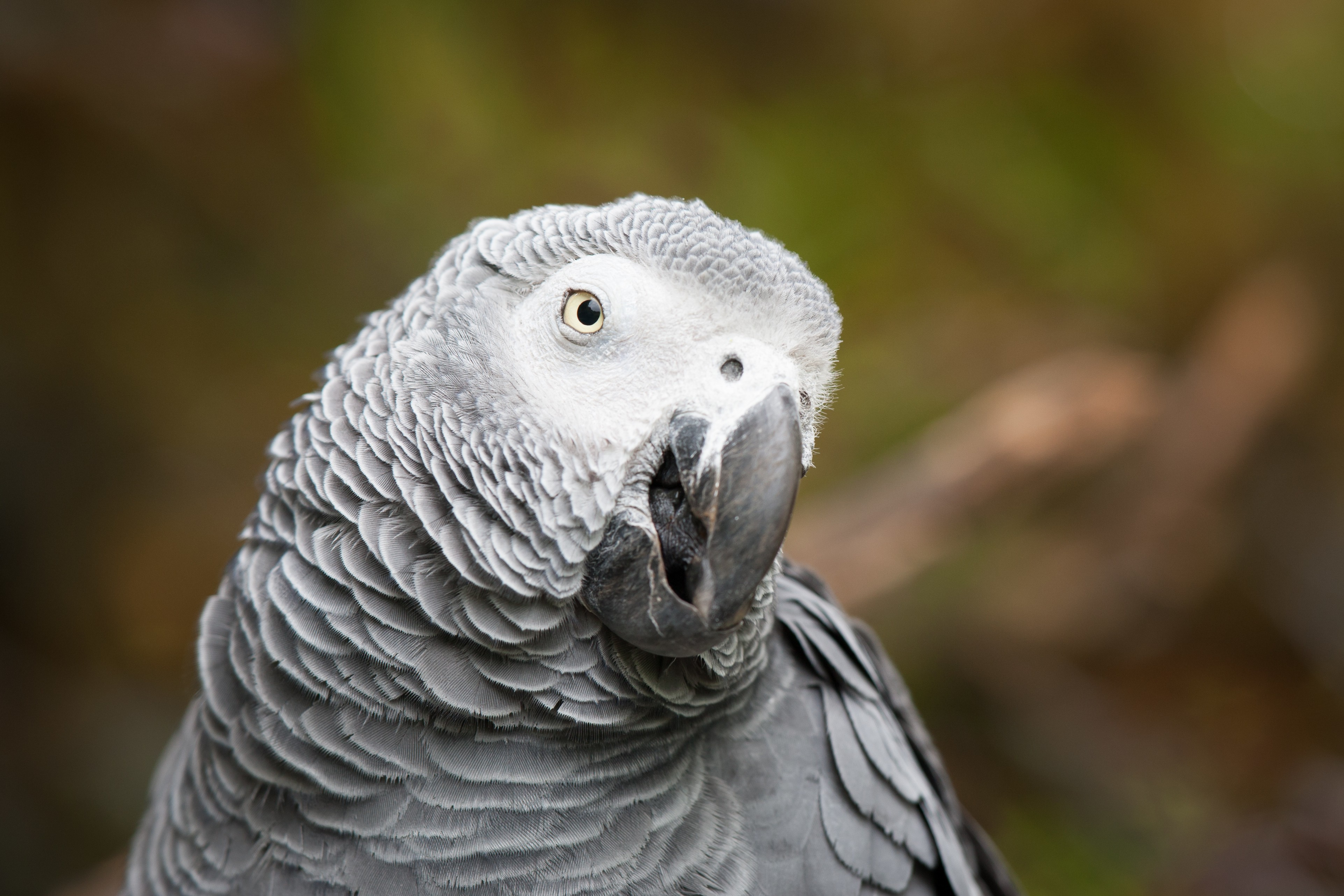 Quotes Iphone Wallpaper Pinterest Wallpaper African Grey Parrot Cute Animals Funny Blur