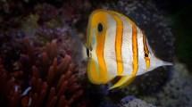 Wallpaper Anemone Inhabitants Aquarium Water Aqua