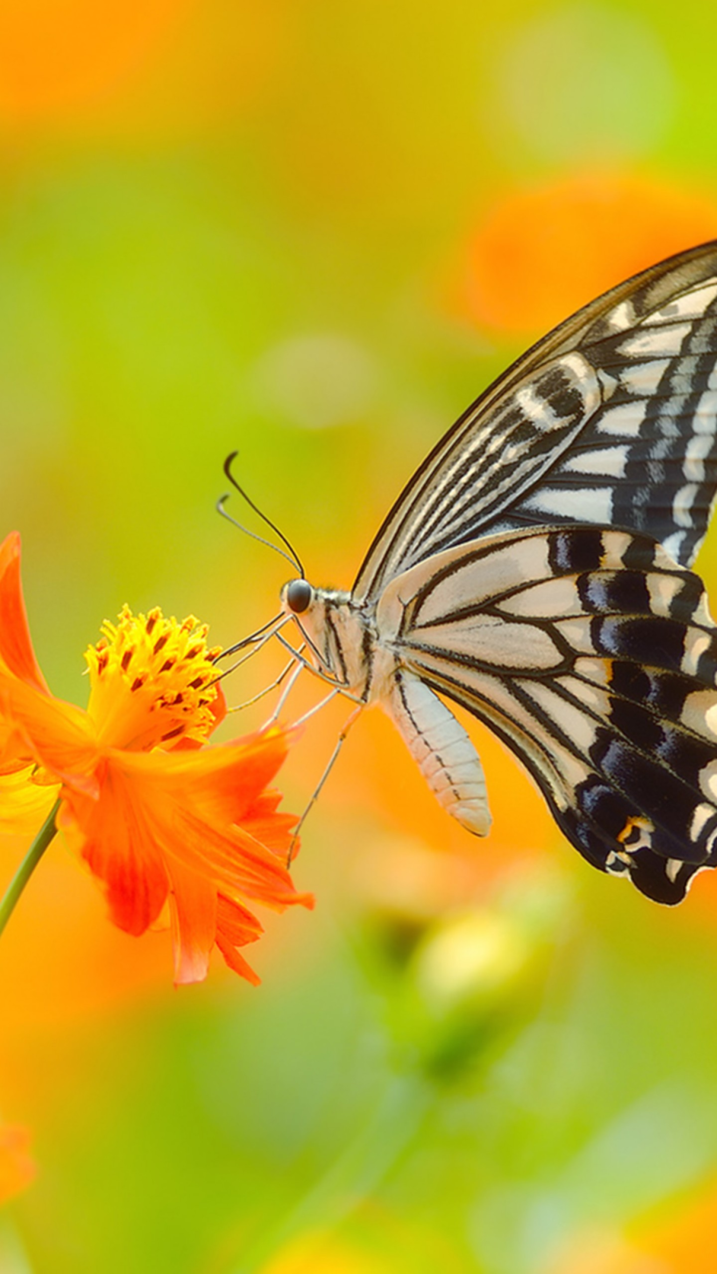 Yellow Wallpapers With Quotes Wallpaper Butterfly 5k 4k Wallpaper Colorful Flowers