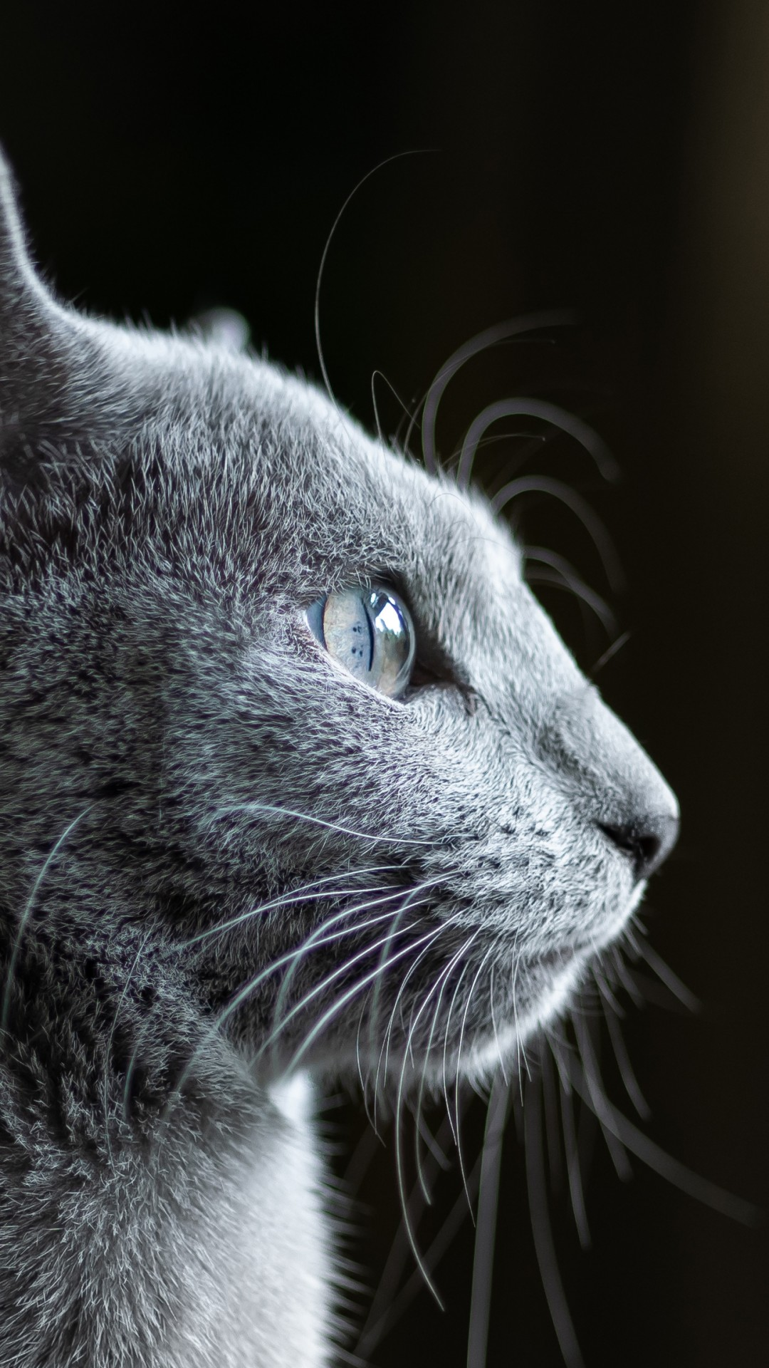 Cute Quotes About Life Wallpapers Wallpaper Cat Grey 4k Animals 19733