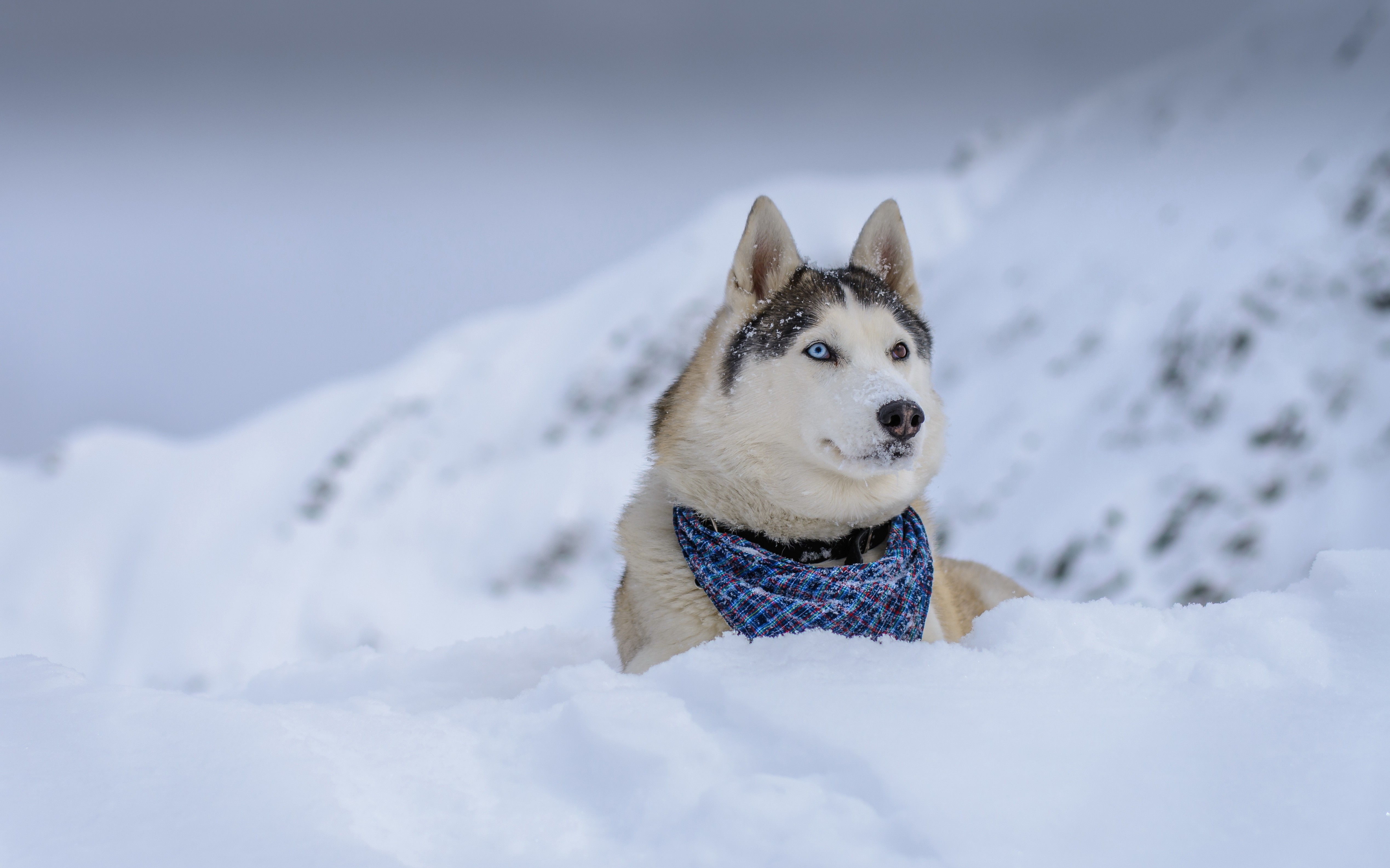 Cute Puppy Wallpapers For Iphone Wallpaper Dog Husky Cute Animals Snow Winter 5k