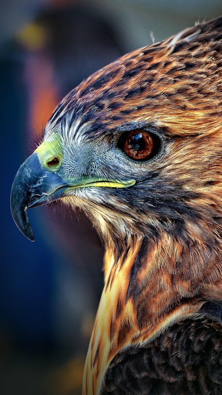 Best Quotes Wallpapers Hd Wallpaper Eagle Blur Cute Animals Animals 4485