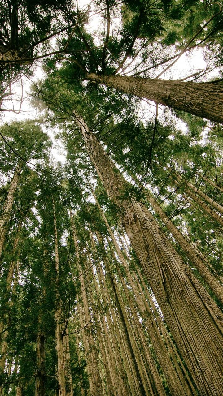 Wolf Wallpaper Hd Wallpaper Forest 5k 4k Wallpaper Threes Green