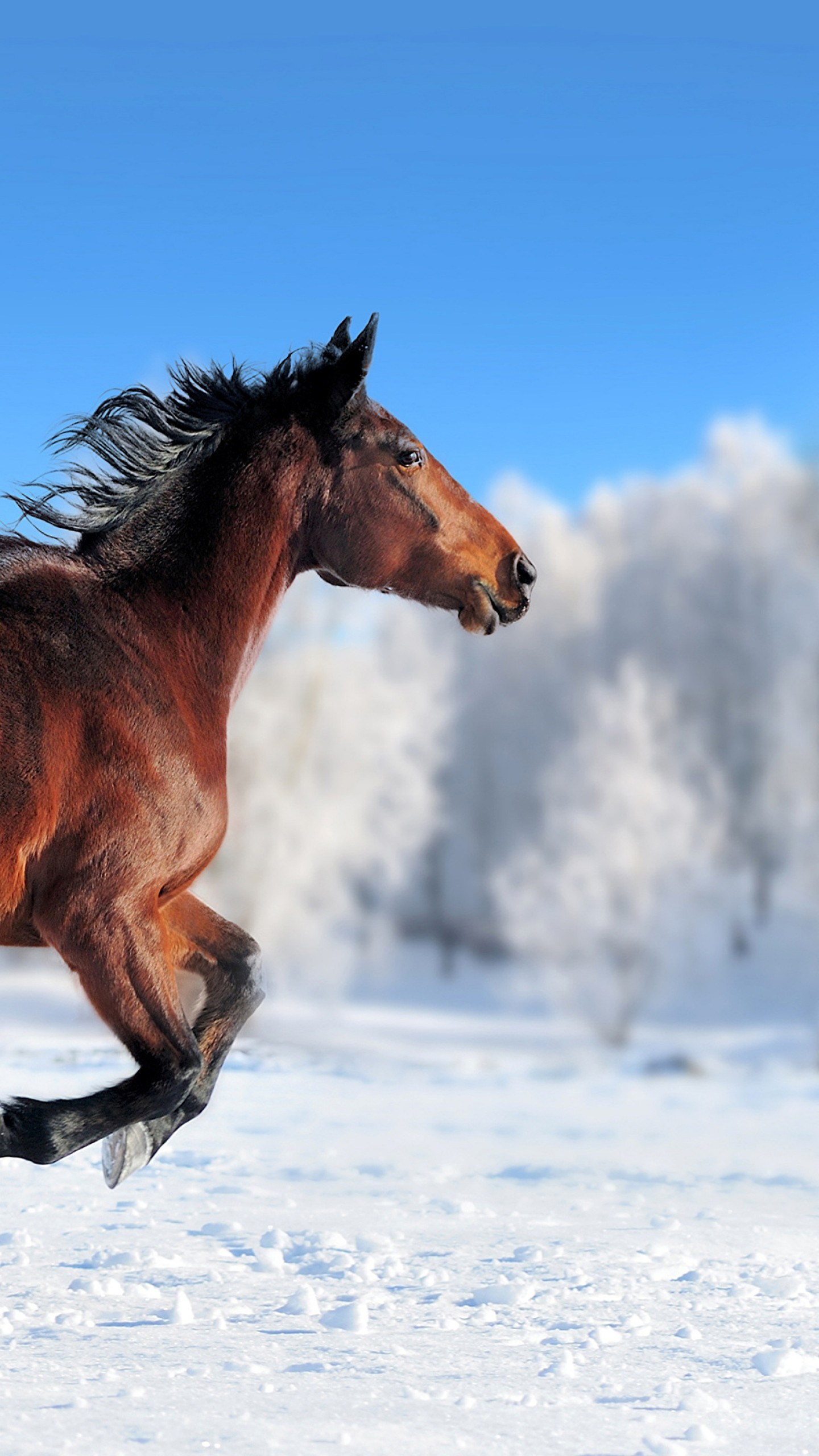 Cute Wallpapers With Quotes Download Wallpaper Horse Cute Animals Snow Winter 4k Animals