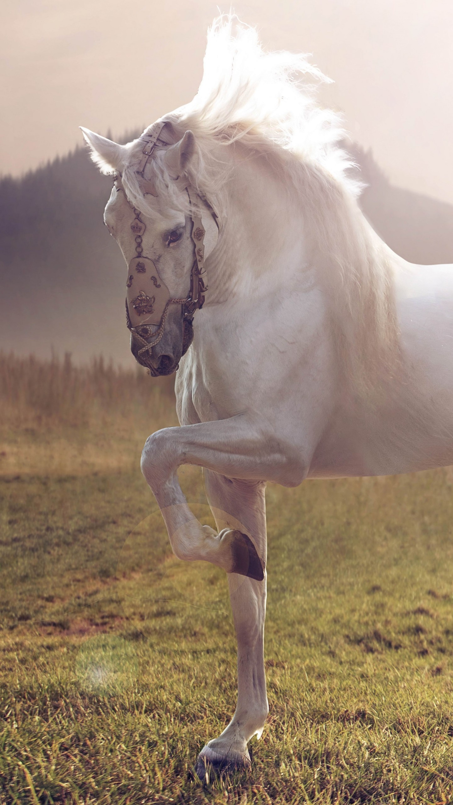 Cute Wallpapers Quotes For Girls Wallpaper Horse Cute Animals Sunset Animals 4538