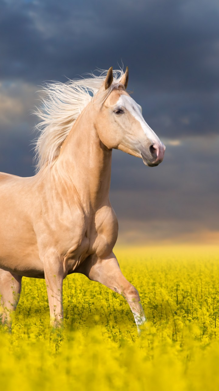 720x1280 Hd Wallpapers Quotes Wallpaper Horse Cute Animals 5k Animals 14707