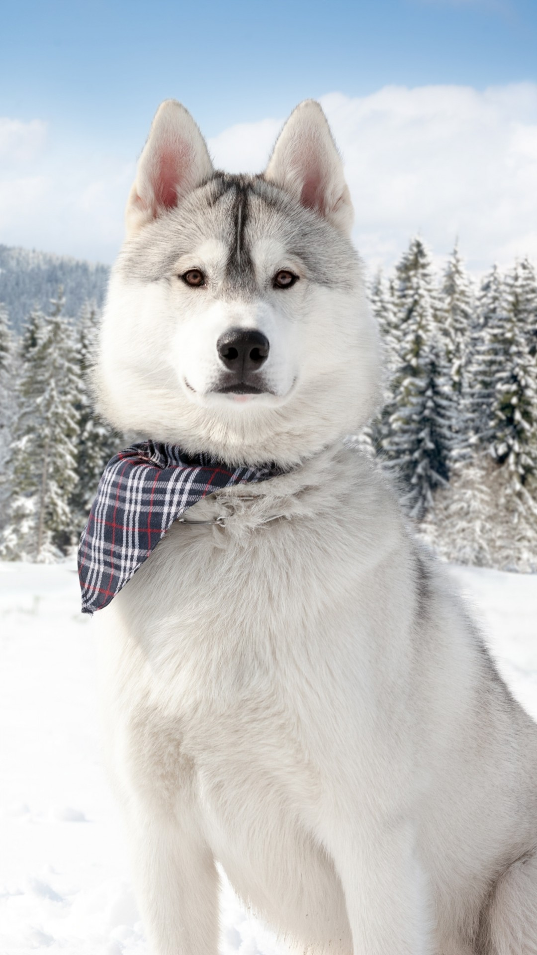 Winter Animal Wallpaper Wallpaper Huskies Dog Puppy Snow Forest Winter White