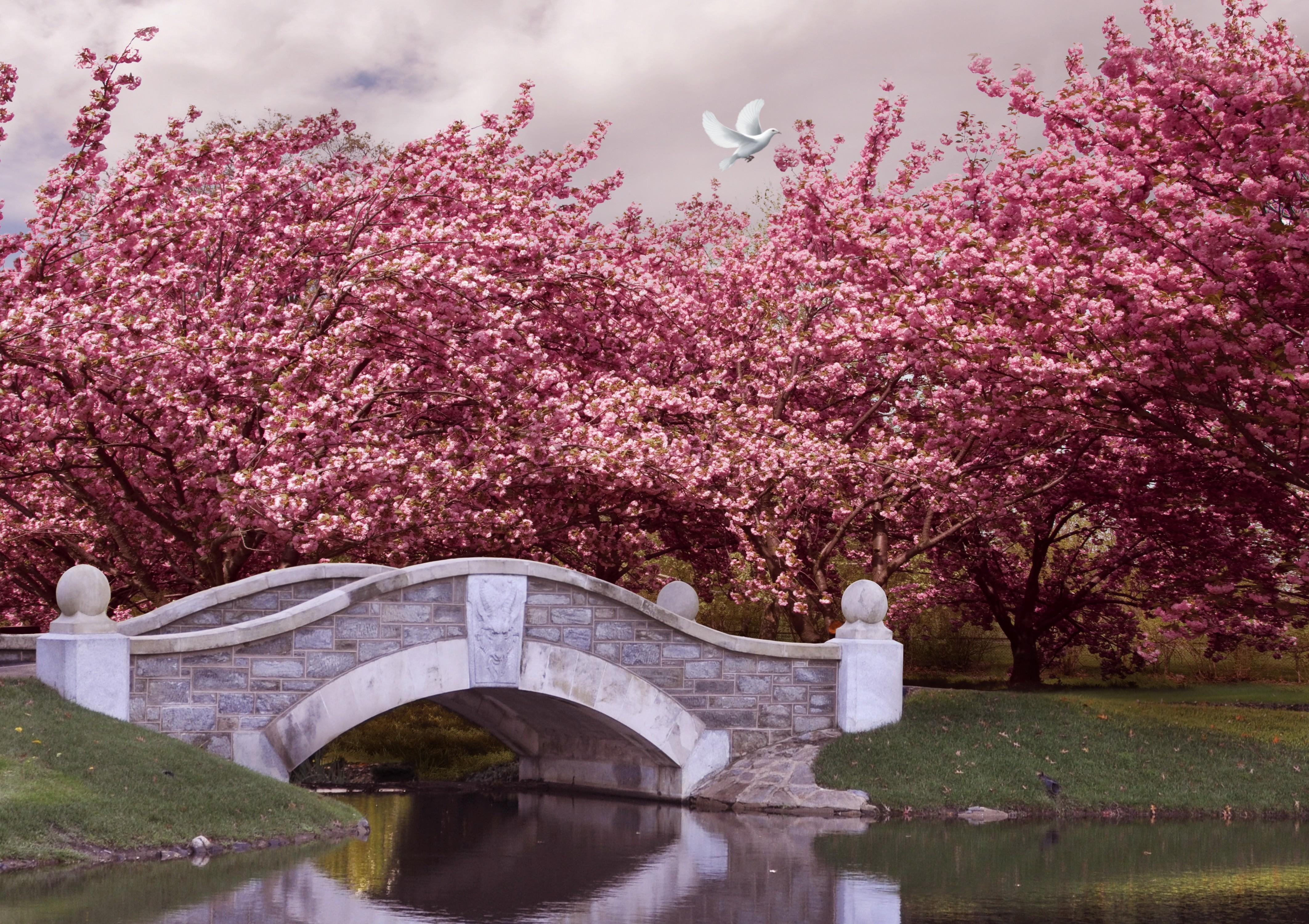 Iphone X Liquid Wallpaper Android Japan Wallpaper Nature Meadows Japan Blossom Cherry