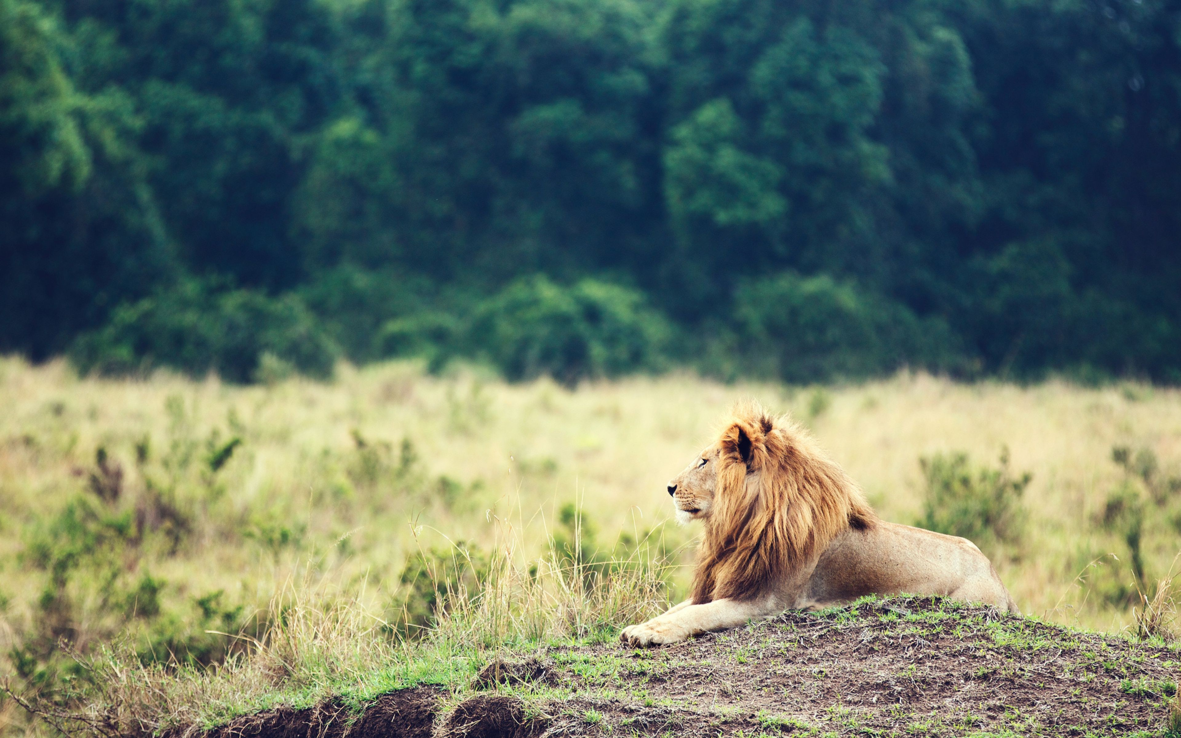 Cute Ipad Wallpaper Pinterest Wallpaper Lion Savanna Trees Animals 5365