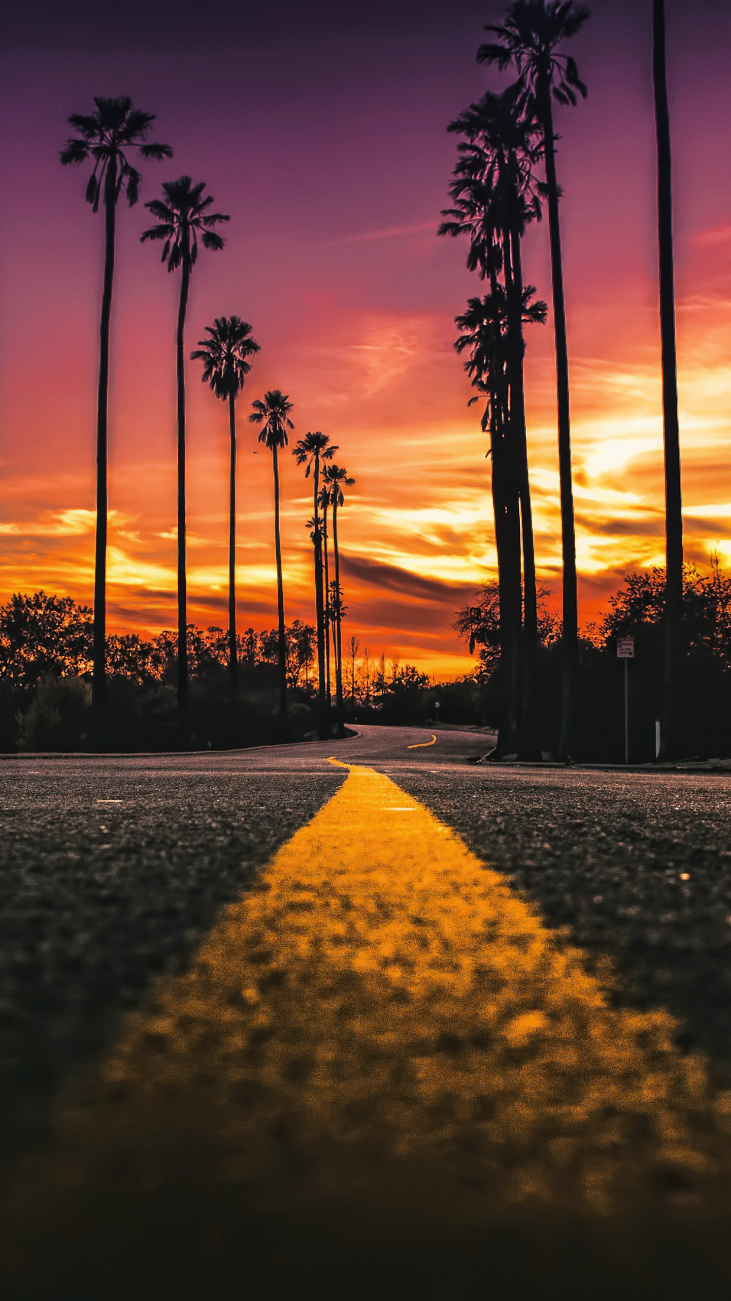 Florida Beach Fall Wallpaper Stock Images Los Angeles California Road Palms Sunset