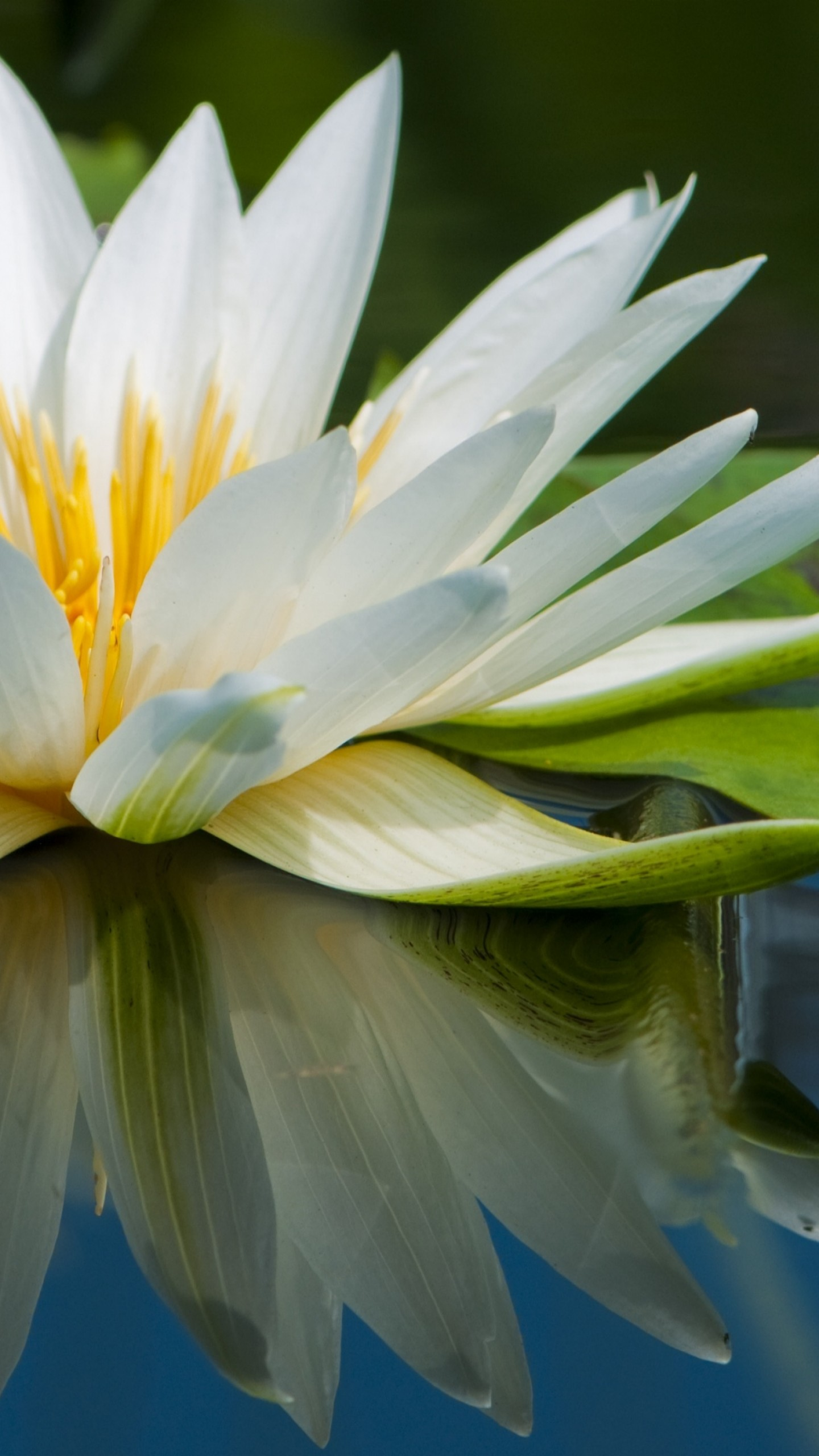 Biker Wallpaper Quotes Wallpaper Lotus 5k 4k Wallpaper Flowers Lake River