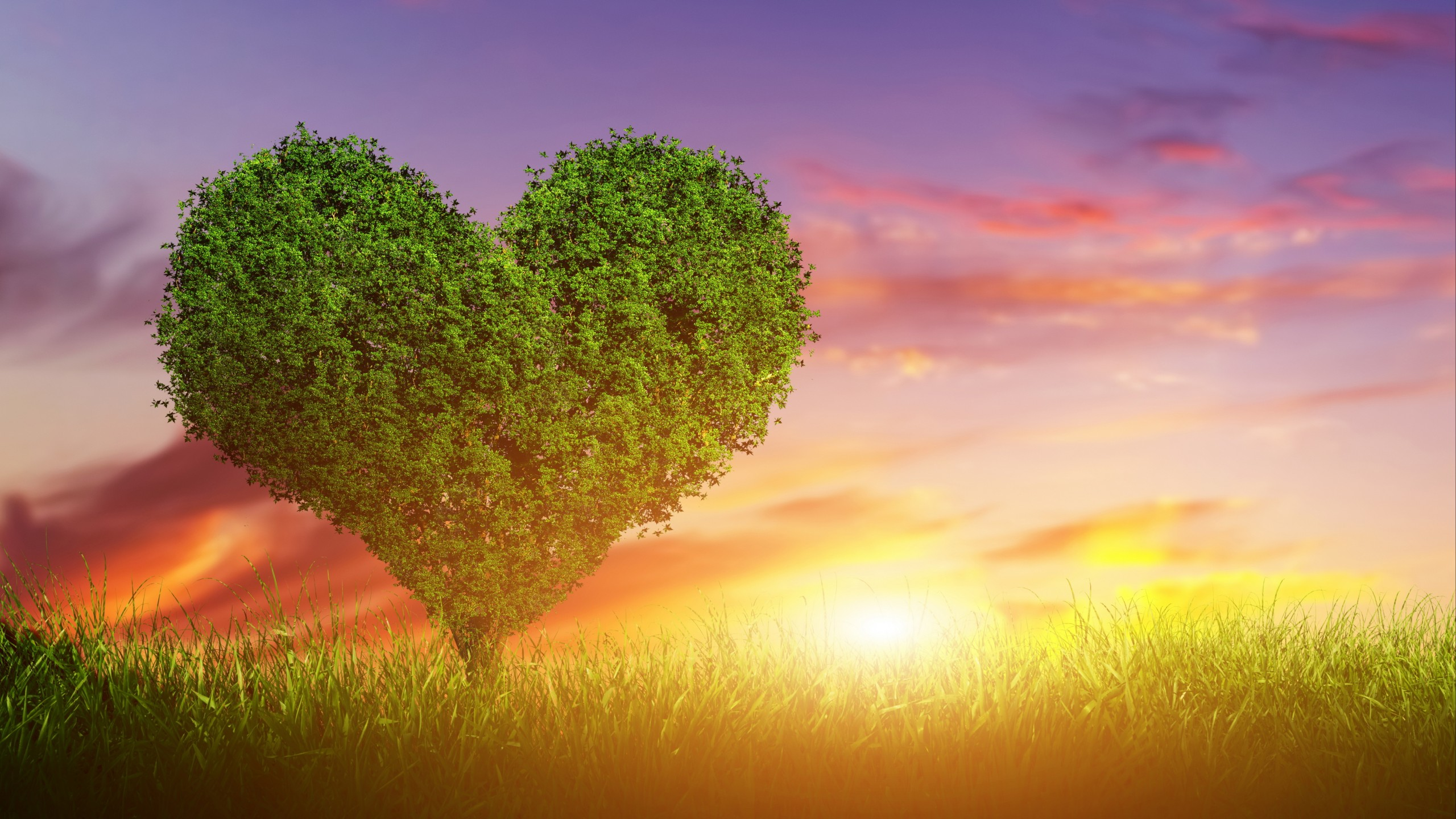 Stock Images Love Image, Heart, Tree, 5k, Stock Images #14863