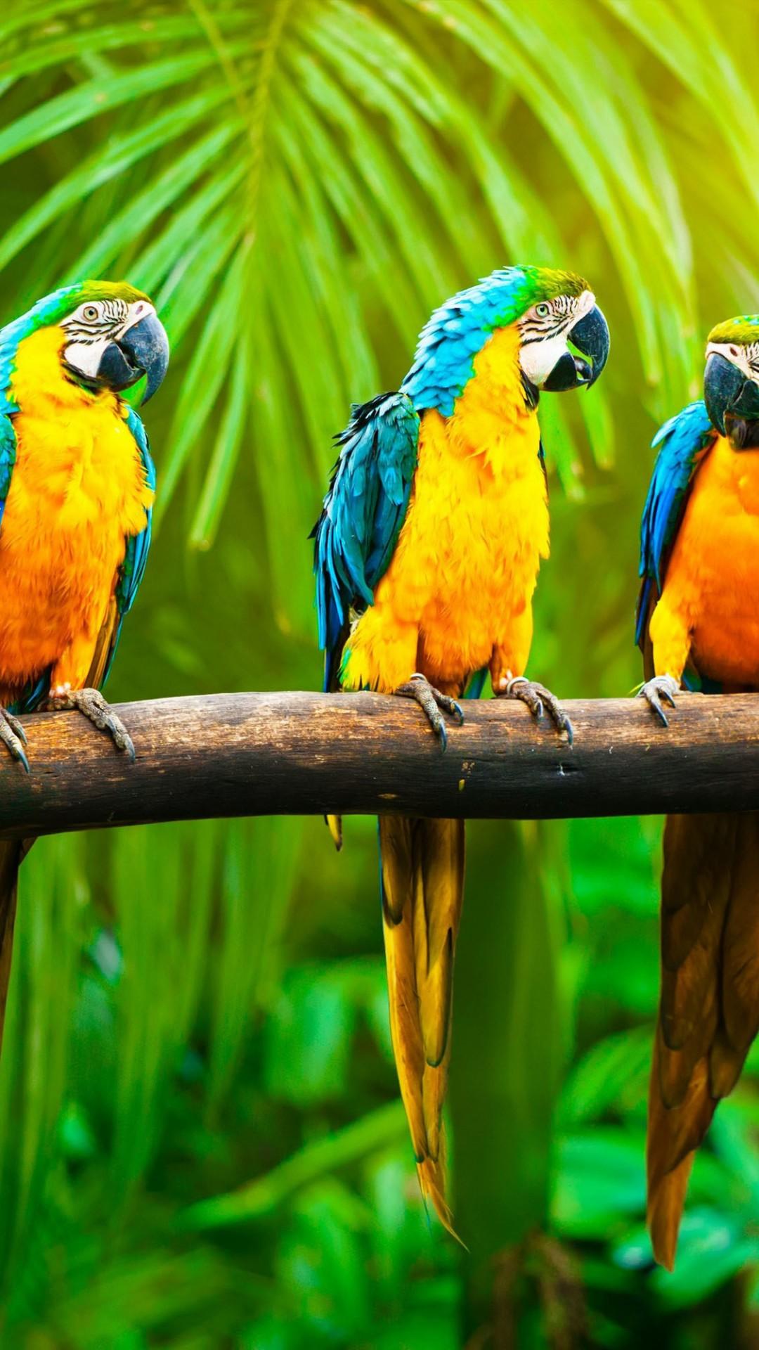 Branch Wallpaper Cute Wallpaper Macaw Parrot Tropics Animals 4566