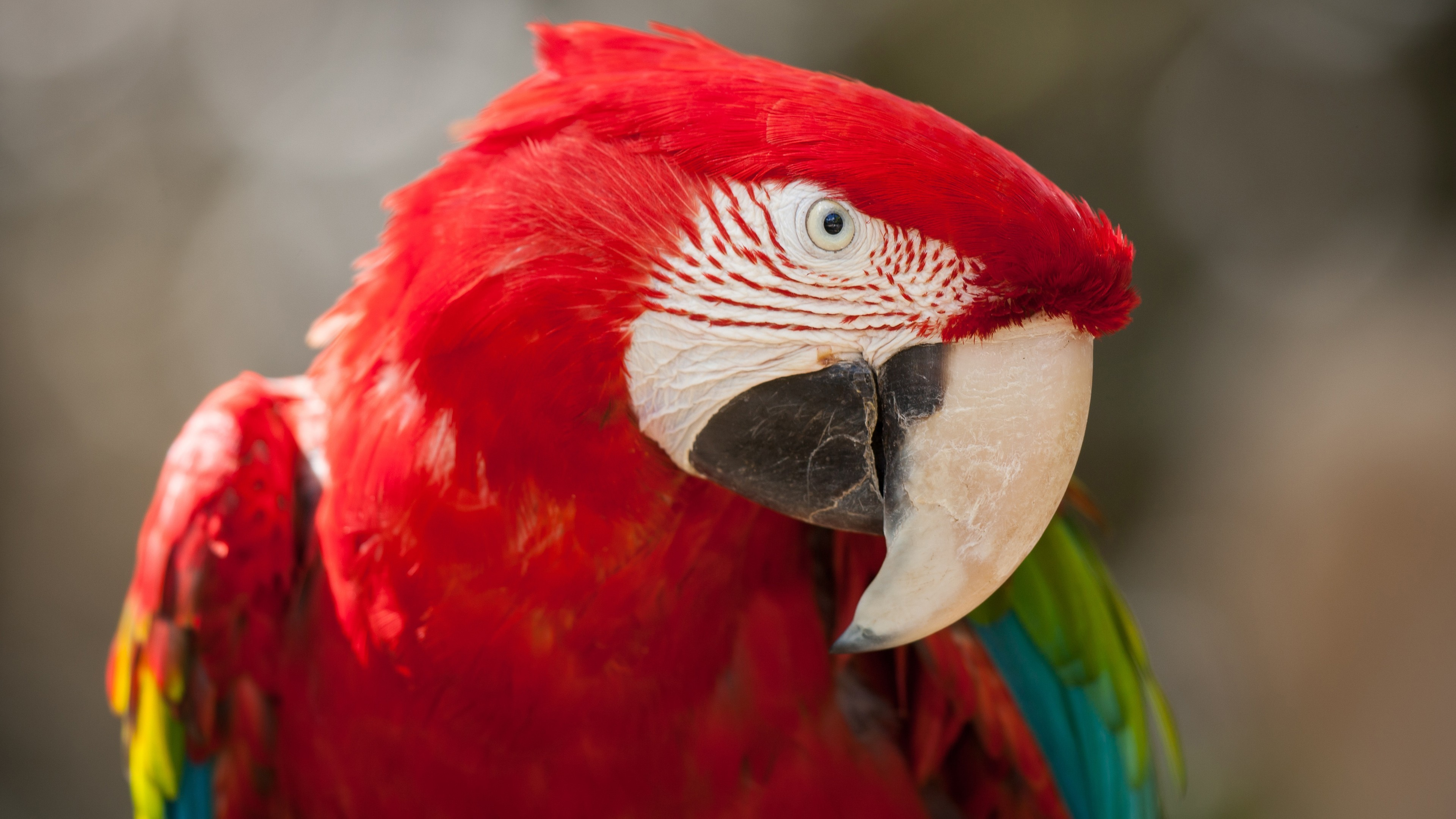 Hd Wallpapers With Quotes For Desktop Wallpaper Macaw Parrot Tropical Bird Red Animals 12484