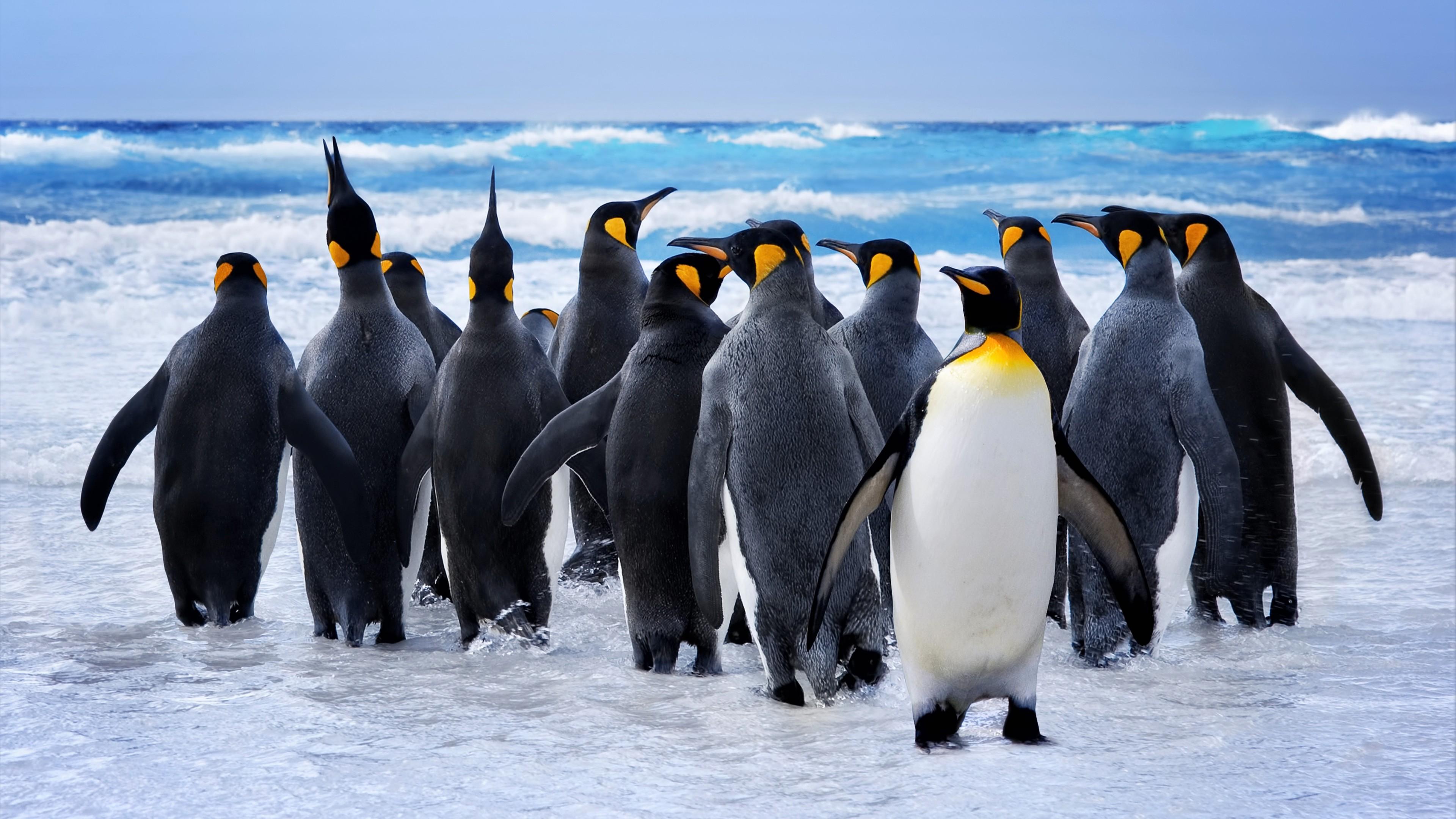 View Girl Wallpaper Wallpaper Penguins Ocean 8k Animals 17417
