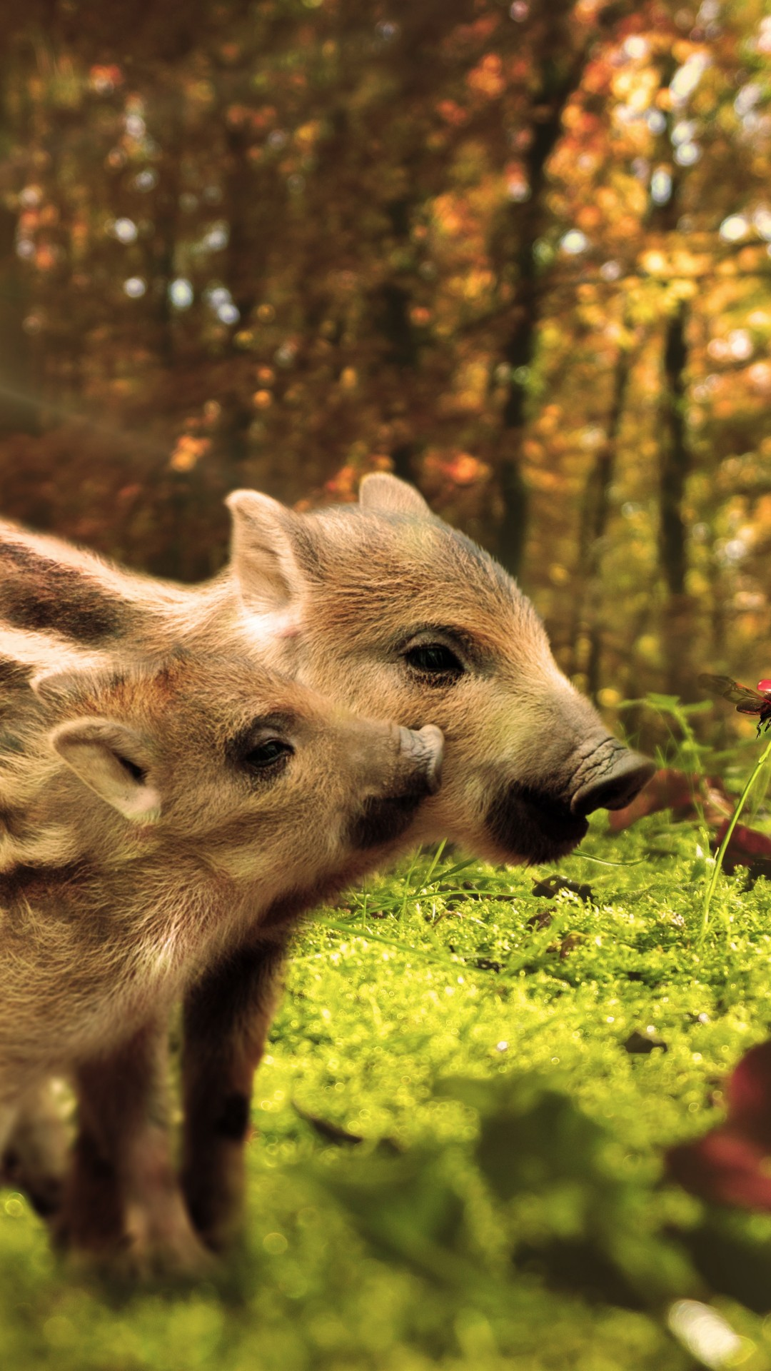 Cute Animal Wallpaper Hd Wallpaper Pig Funny Animals 7k Animals 18889