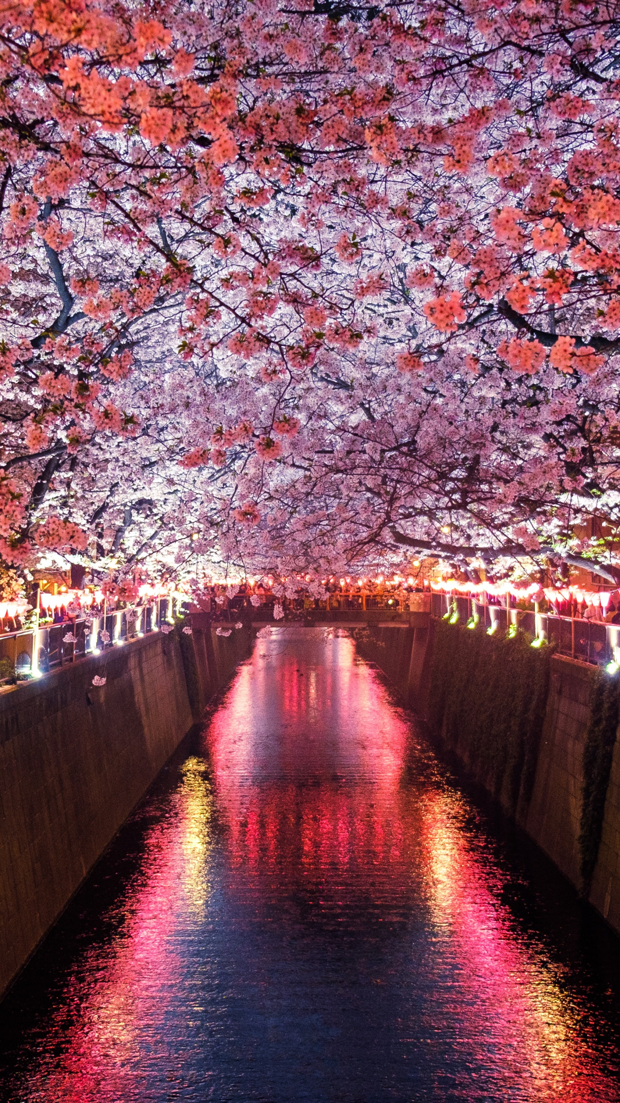 Anime Quotes Wallpaper Wallpaper Sakura Spring 5k Nature 19445