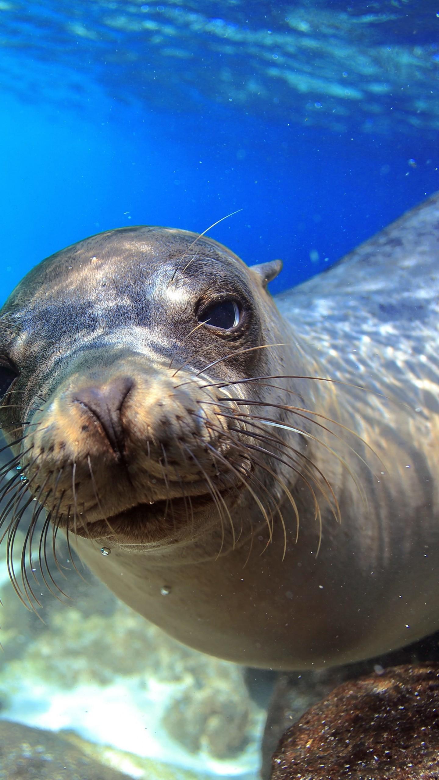 Wallpapers Cool Quotes Wallpaper Sea Lion Galapagos Island Ecuador Underwater