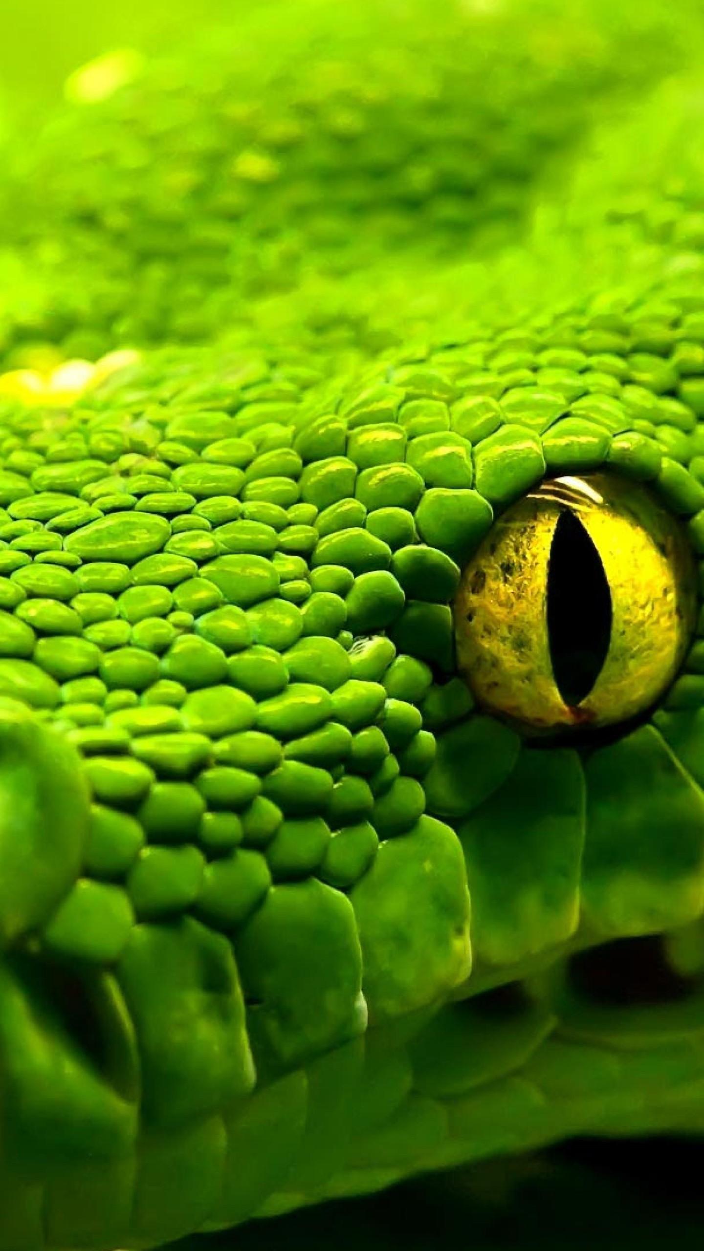 Hd 3d Snake Wallpapers Wallpaper Snake Green Reptile Eyes Animals 713
