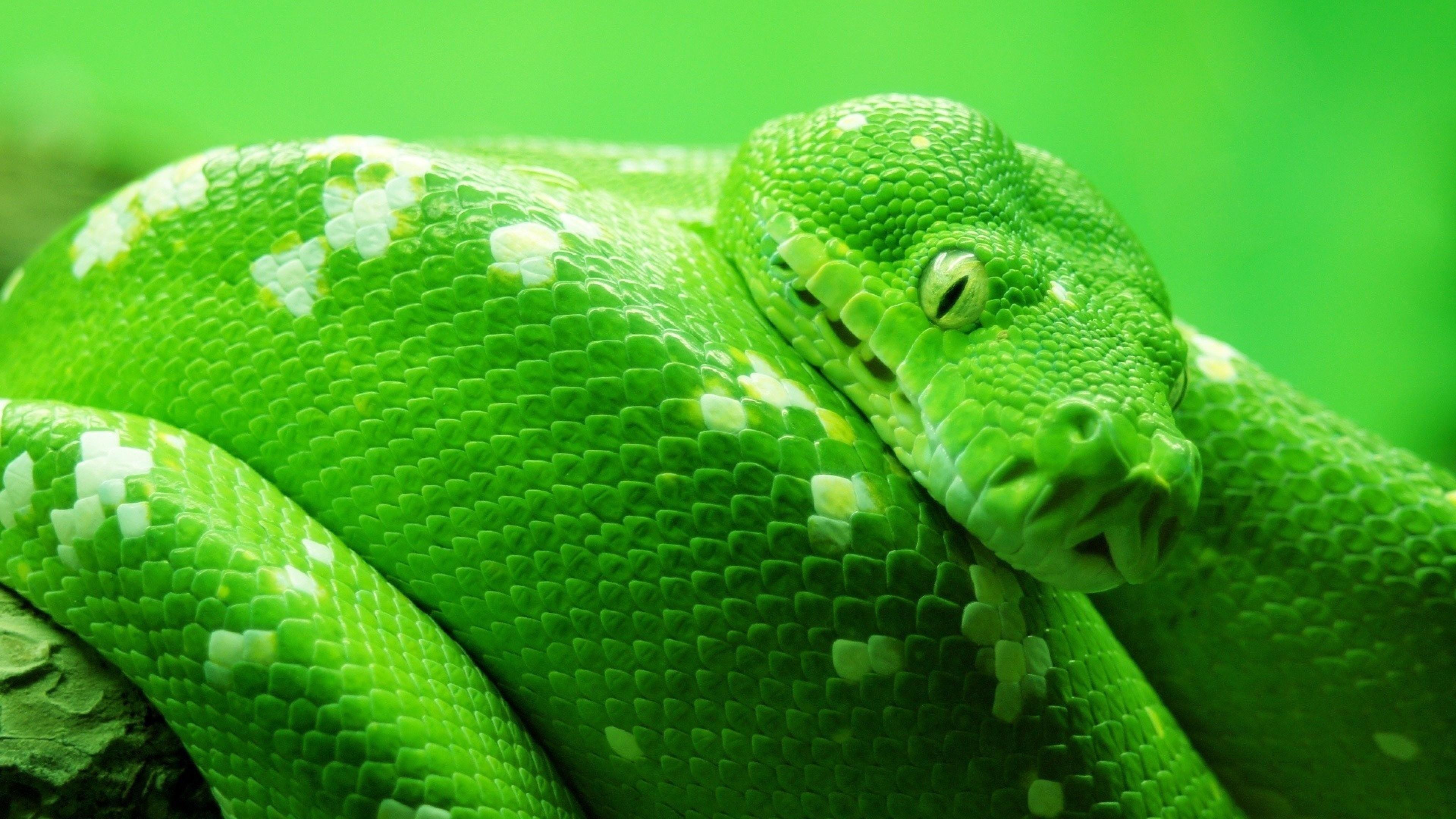 Ios Live Wallpaper Iphone X Wallpaper Snake Green 4k Animals 14978