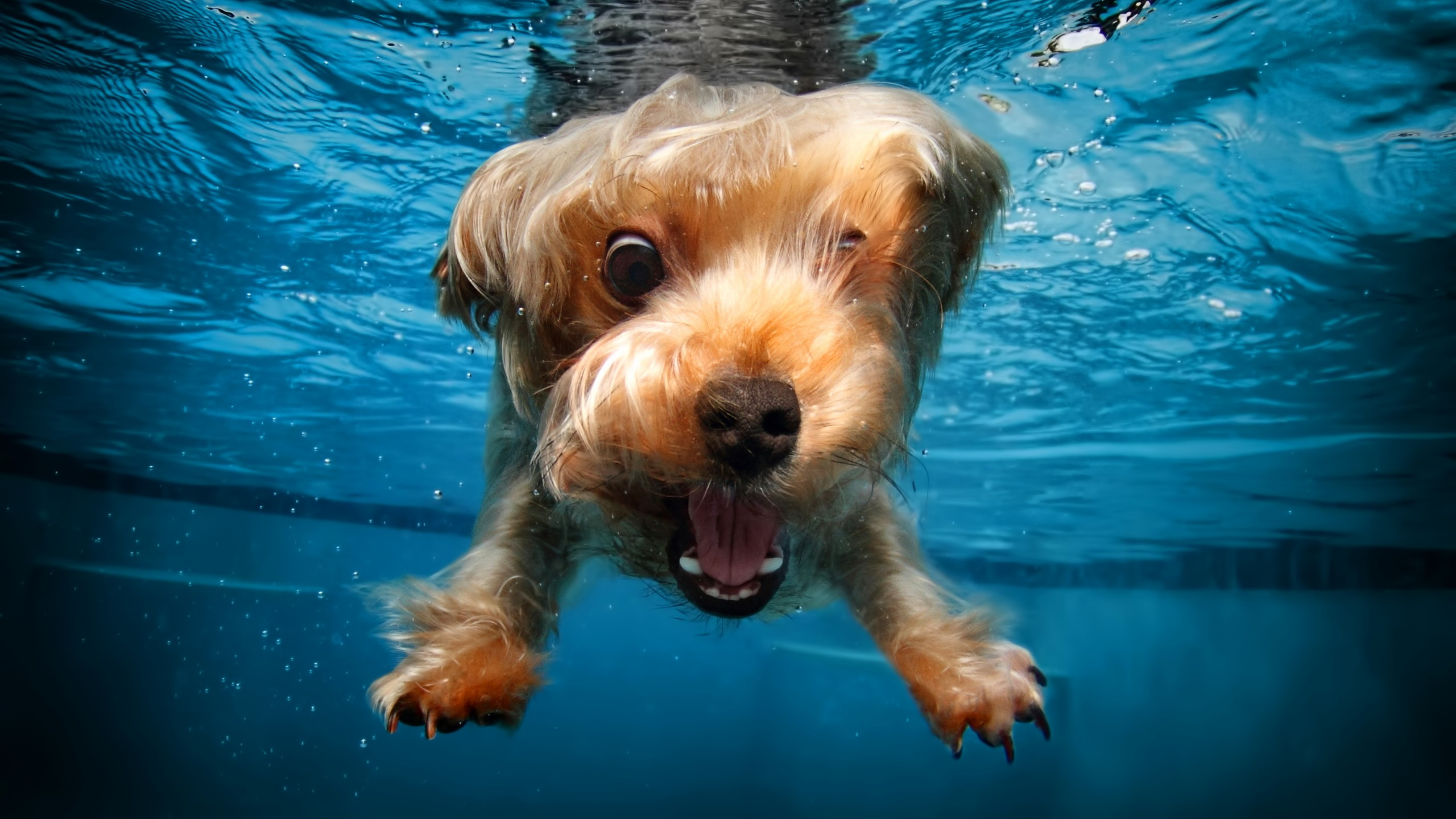 Cute Silly Wallpapers Wallpaper Terrier Dog Underwater Cute Animals Funny