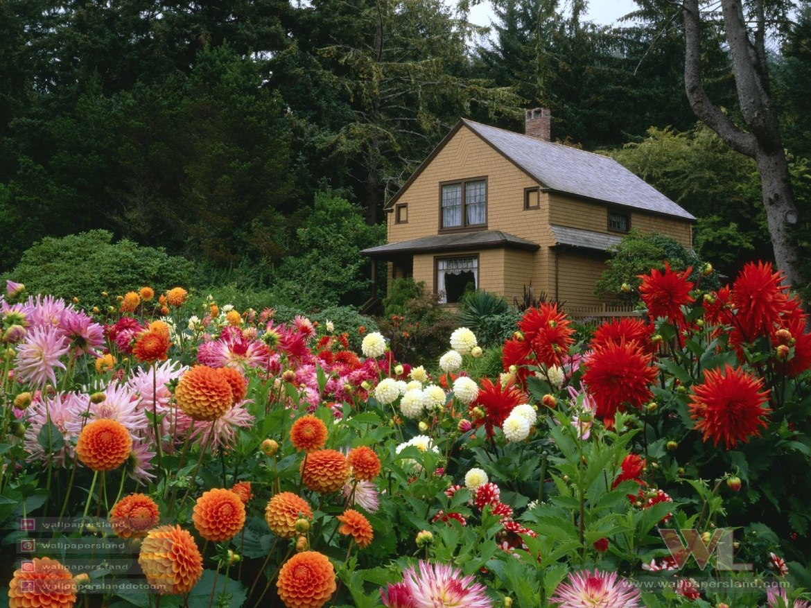 Garden House and Dahlias, Shore Acres State Park, Oregon
