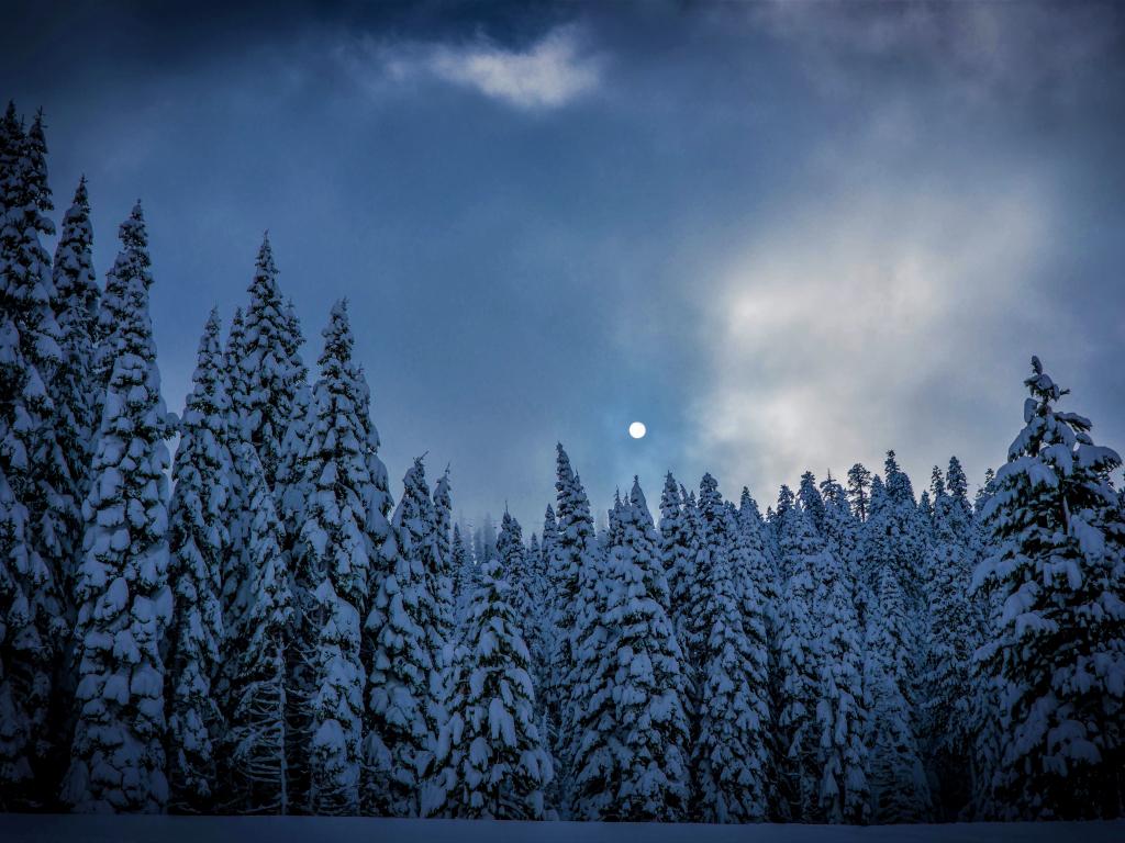 Cute Wallpaper Galaxy S4 Desktop Wallpaper Winter Night Trees Sky Nature Hd