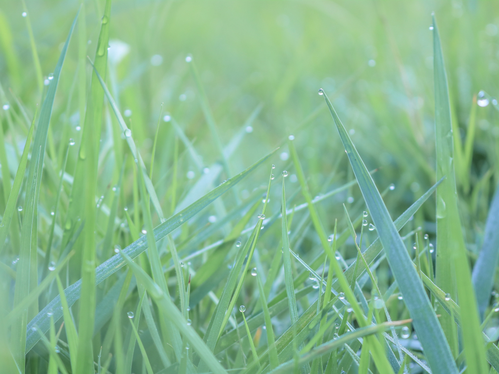 Download Cute Wallpapers For Android Mobile Desktop Wallpaper Green Grass Water Drops Hd Image