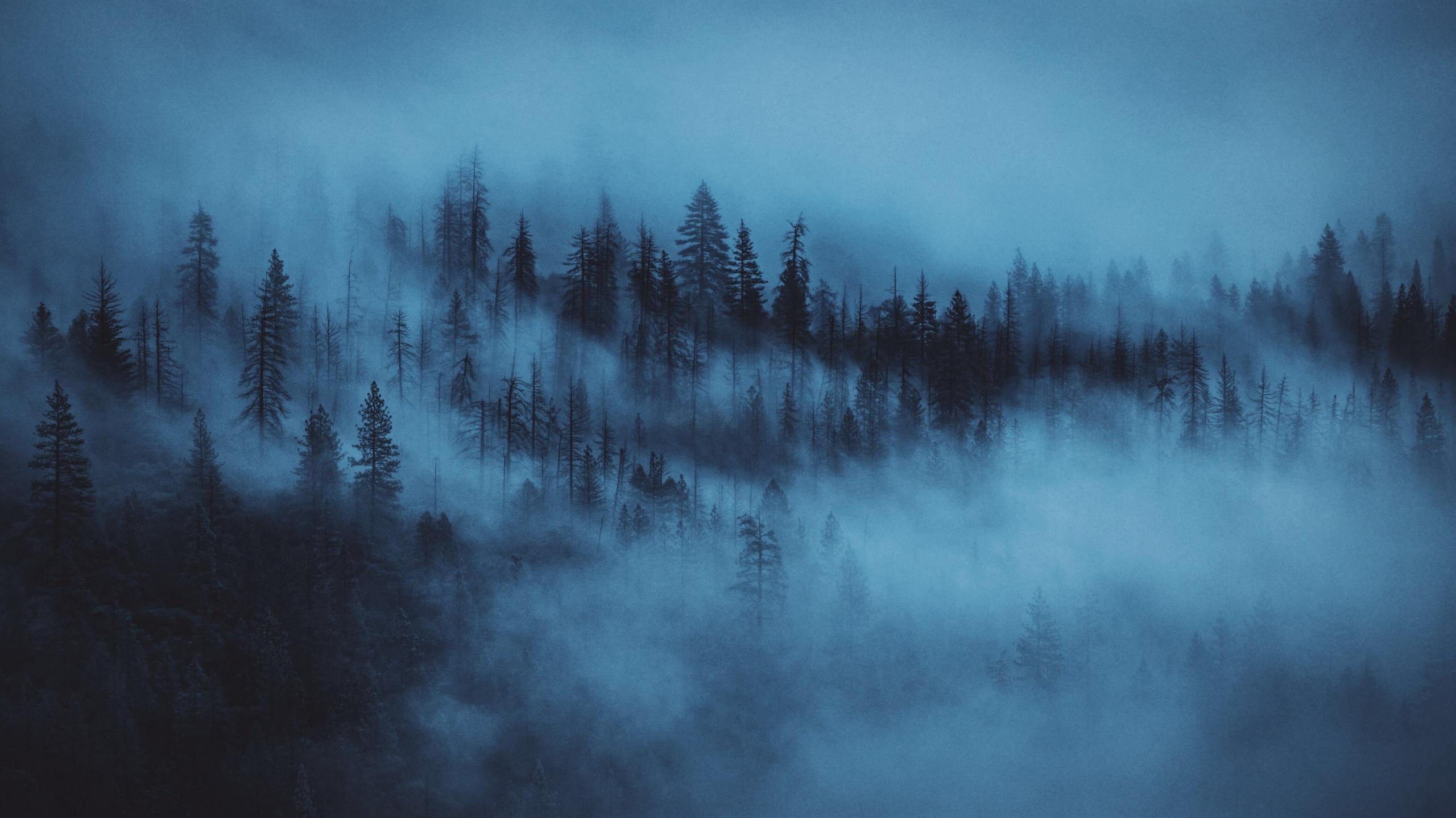 Samsung Galaxy S X 1920 Cars Download 2560x1440 Wallpaper Dark Mist Trees Forest