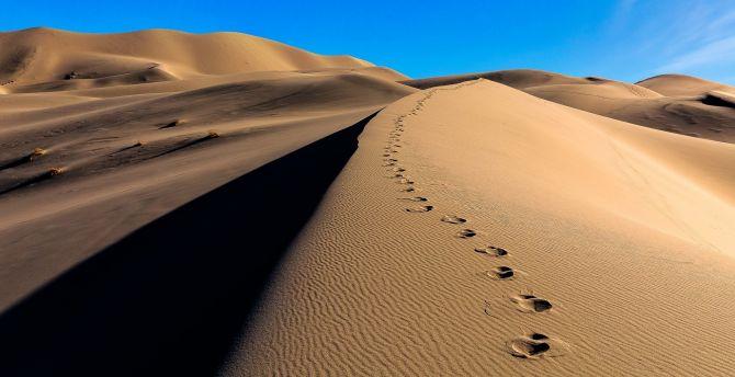 Desktop Wallpaper Desert Camel S Footprint Sand Hd