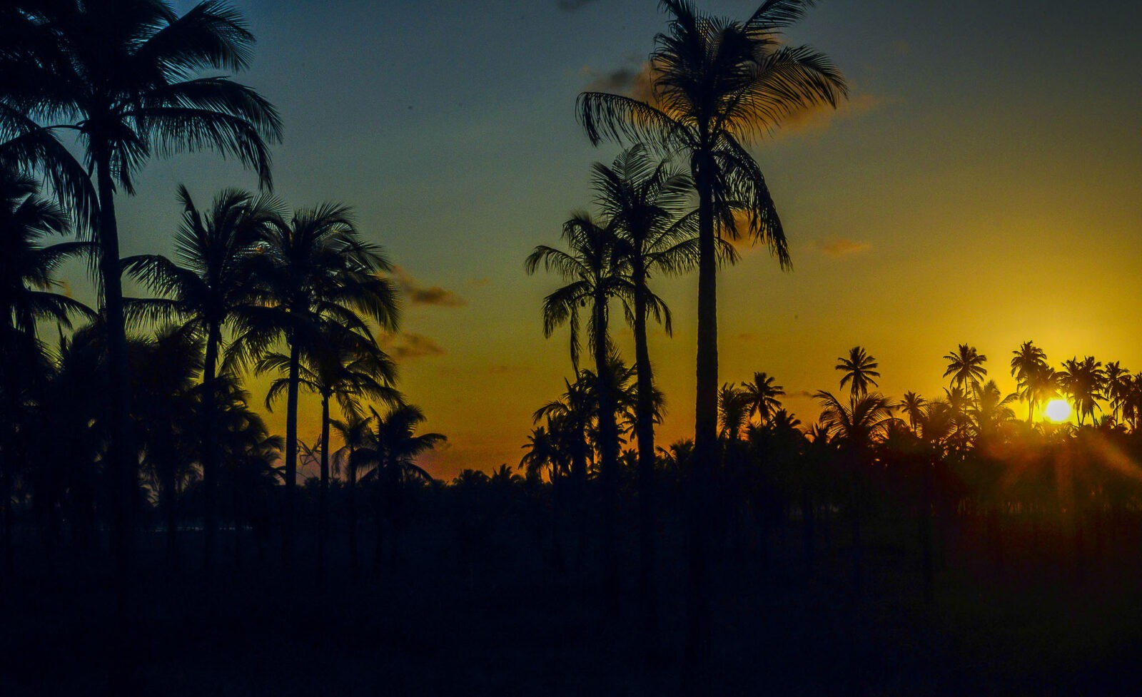 Iphone 5 Hd Wallpaper Nature 50 Palm Trees Sunset Wallpapers Hd High Quality Download