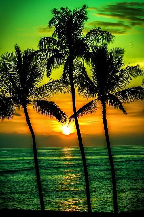 Best Iphone Wallpapers Hd 50 Palm Trees Sunset Wallpapers Hd High Quality Download