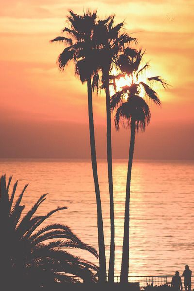 Best Looking Car Wallpaper 50 Palm Trees Sunset Wallpapers Hd High Quality Download