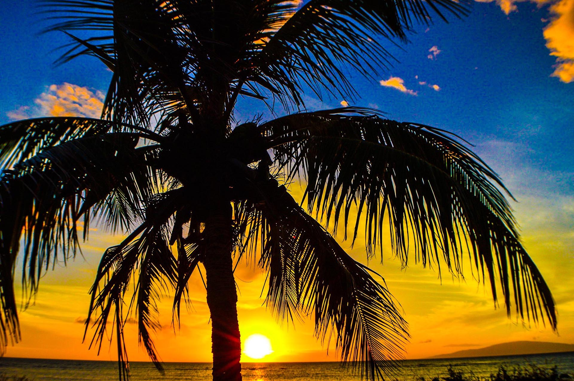 Blue Anime Wallpaper 50 Palm Trees Sunset Wallpapers Hd High Quality Download