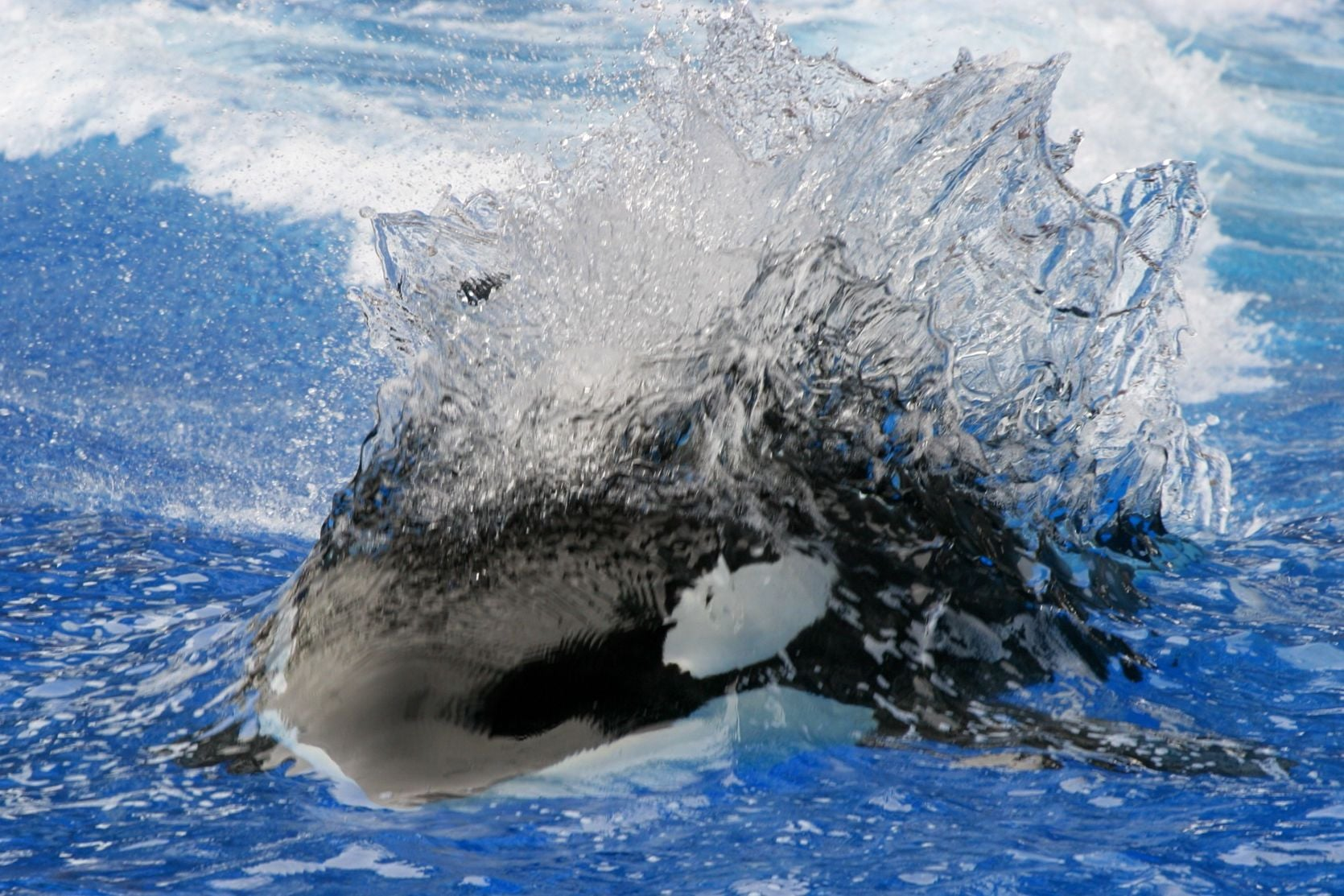 Hd Car Wallpapers 1080p Download Orca Killer Whale Hd Wallpapers Download