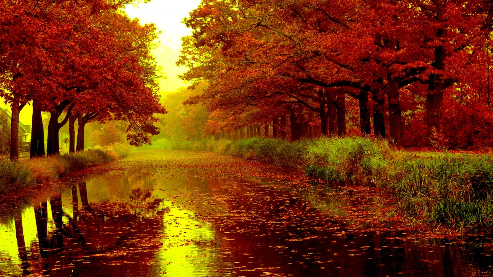 Fall Leaves Wallpaper Border 1920x1080 Adorable Red Trees River Leafs Desktop Pc And