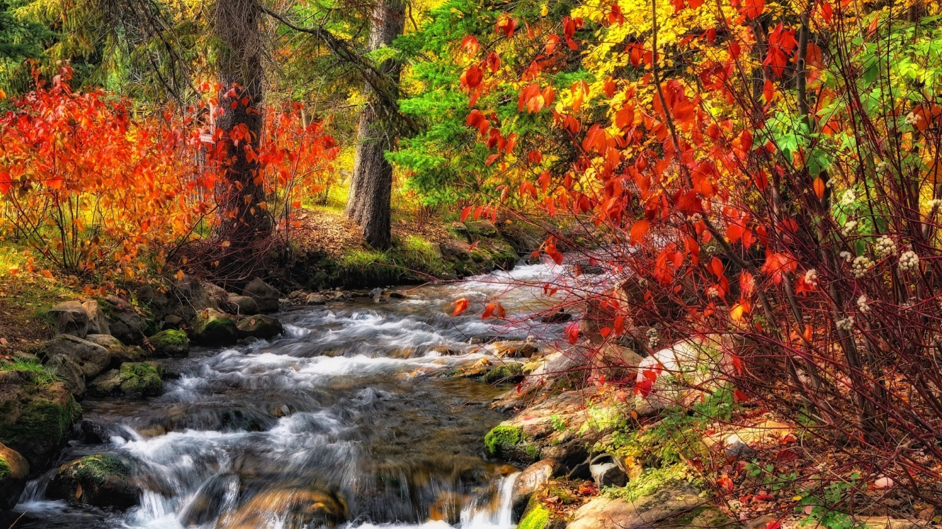 1366x768 Fall Wallpapers 1366x768 Autumn Bushes Amp Rushing Creek Desktop Pc And Mac