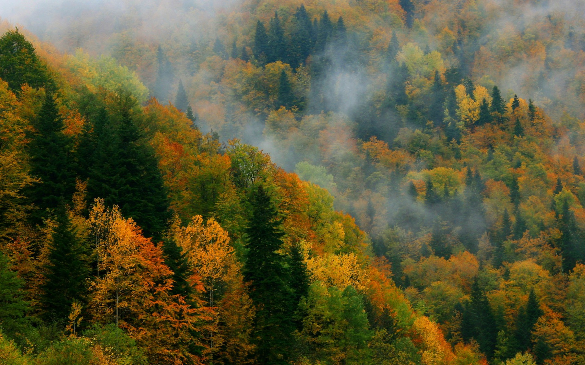 Fall Trees Wallpaper For Desktop Autumn Forest Azerbaijan Asia Wallpapers Autumn Forest