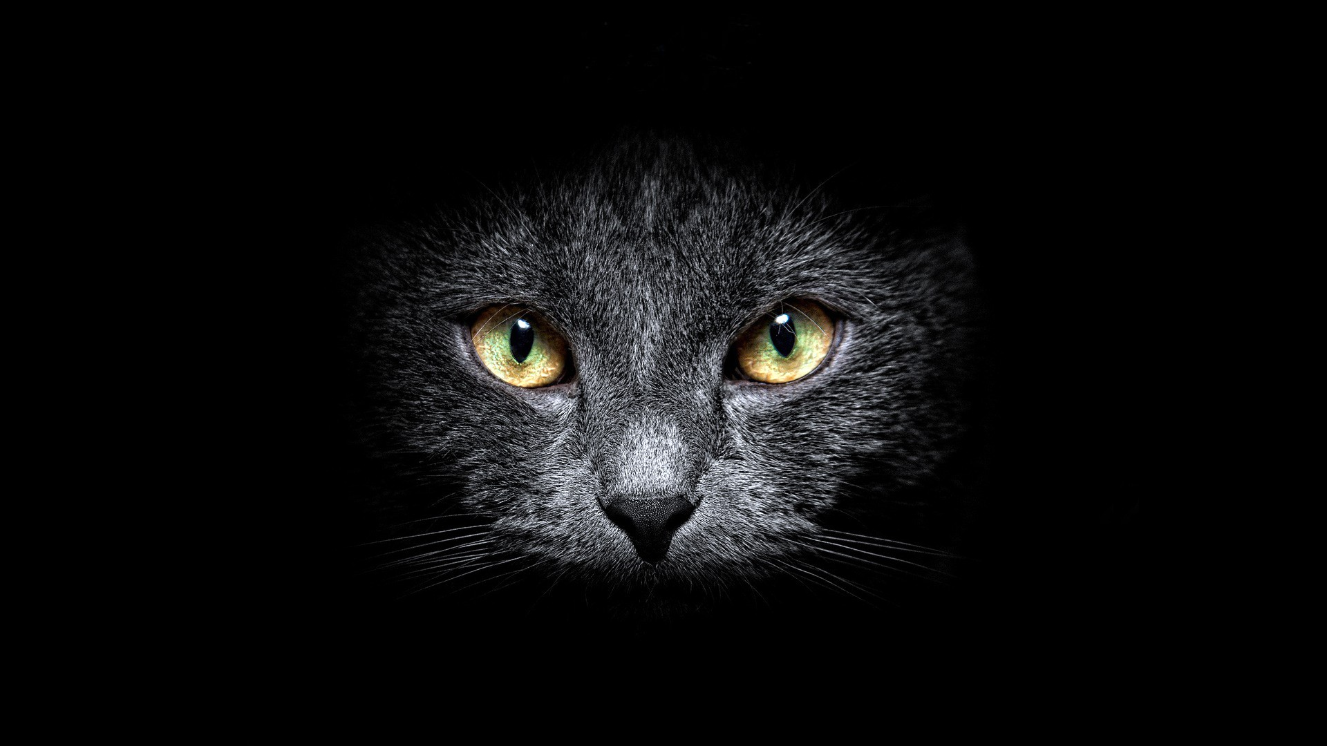 1920x1080 black cat in the dark desktop pc and mac wallpaper