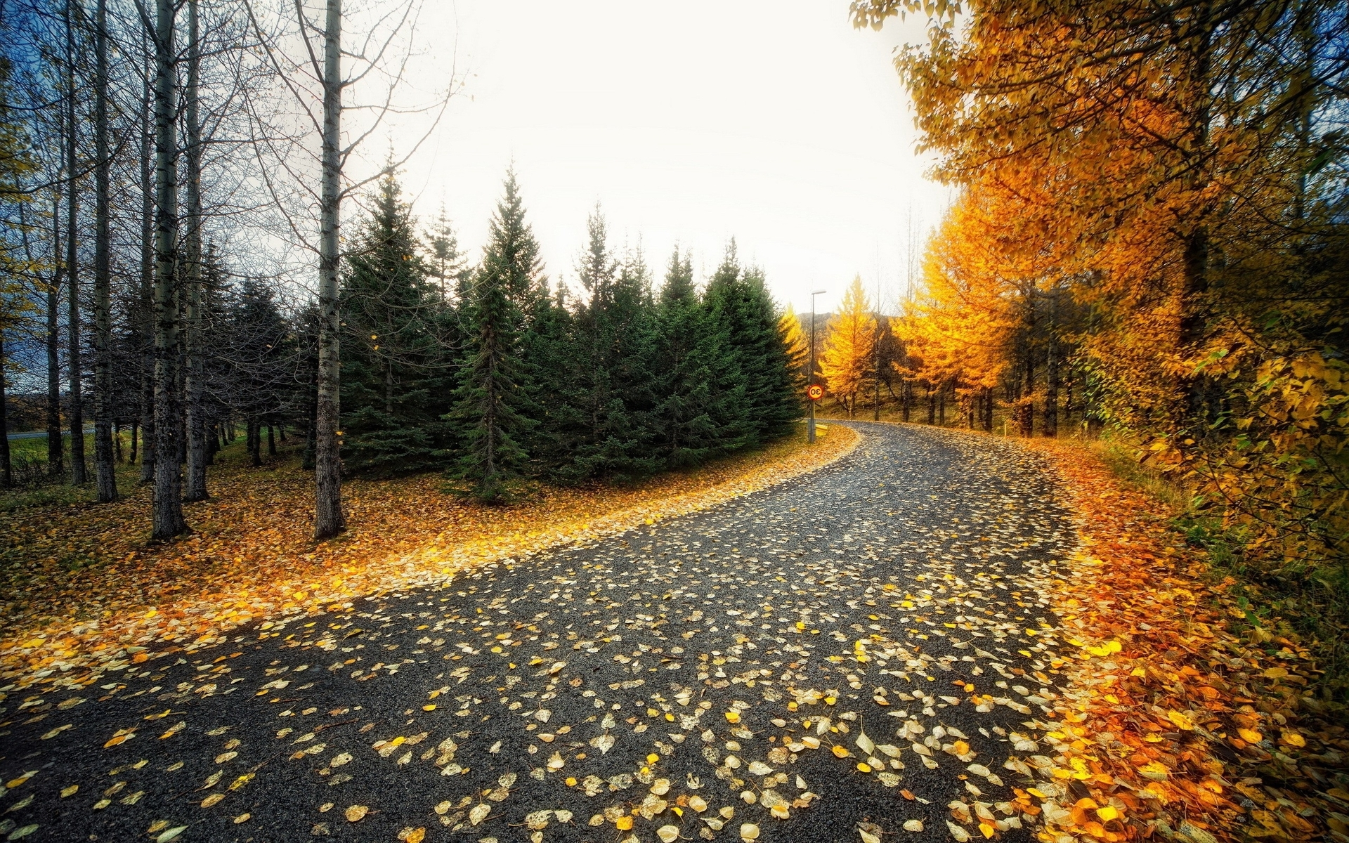 Canada Wallpaper Hd Iphone Calico Trees Nice Road Foliage Wallpapers Calico Trees