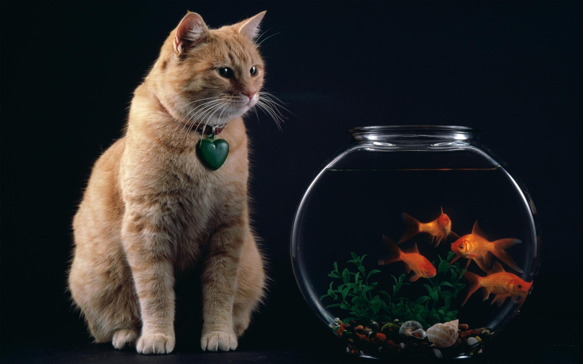 Cute Fish Iphone Wallpaper Cat And Fish Bowl Wallpapers Cat And Fish Bowl Stock Photos