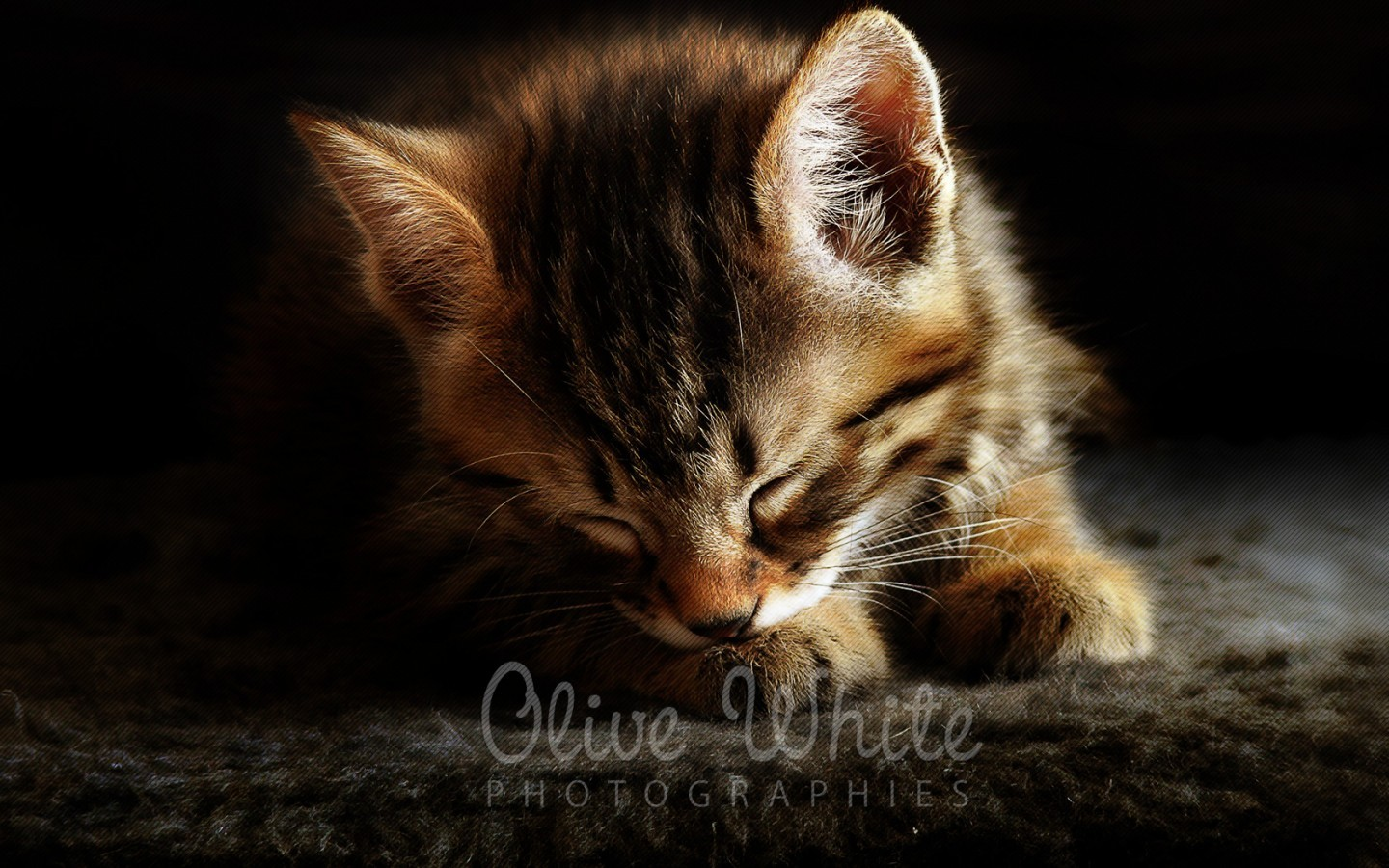Cute Kitty Cat Wallpapers Corto Le Chaton Wallpapers Corto Le Chaton Stock Photos